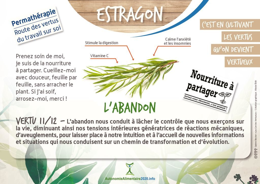 thumbnail of FicheVertu11-estragon