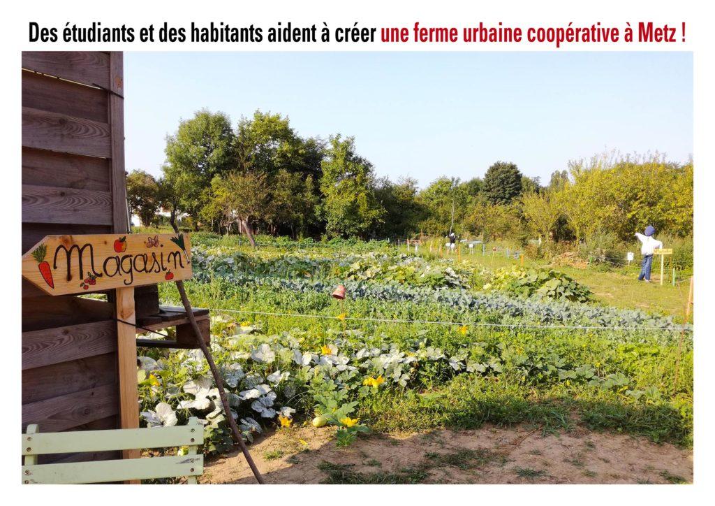 """Lorraine : """"Une ferme bio et urbaine pousse entre les murs"""""""